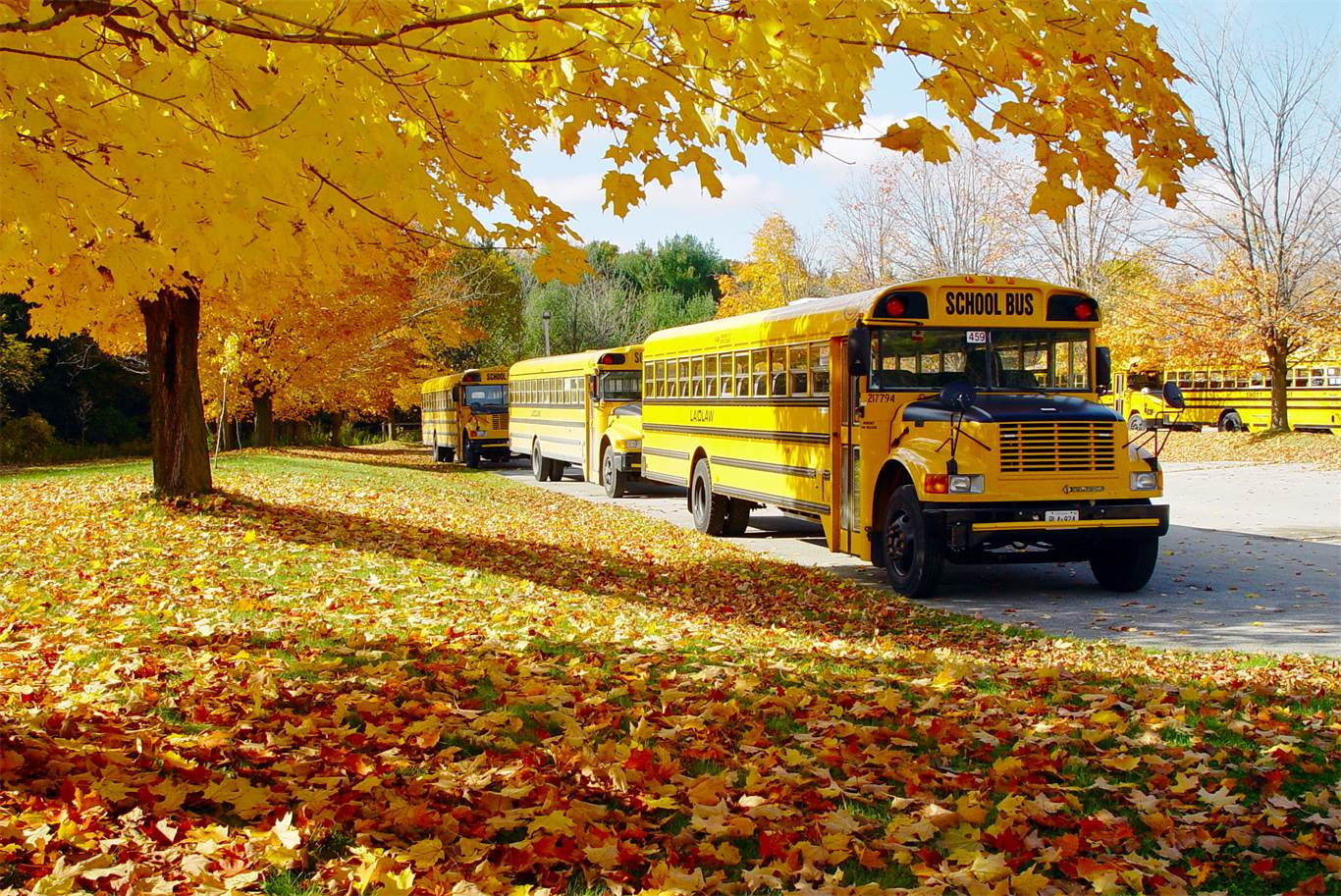 Banner Image for National School Bus Safety Week